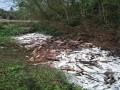 春季低温,四川斑点叉尾鮰春季爆发性疾病频发!部分发病池塘死亡率高达50%以上!