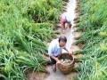 安徽省桐城市双港镇:稻渔综合种养开启高效生态农业新模式