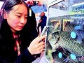 山青水绿养好鱼 湖北省55县市区建水产品质量追溯系统