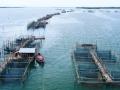 冬季水产养殖需要注意哪些问题?